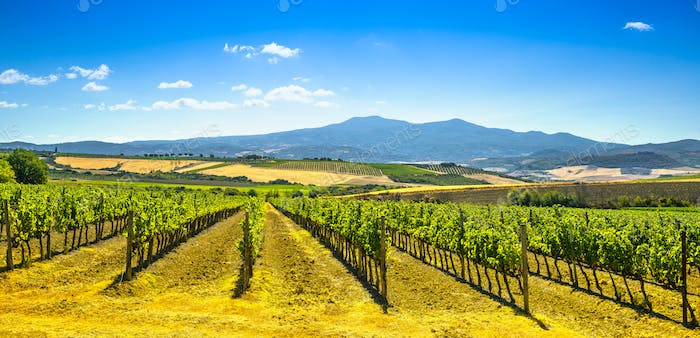 Vineyards, fields and Monte Amiata mountain. Tuscany, Italy