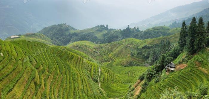 Blick auf grüne Longji terrassierten Felder