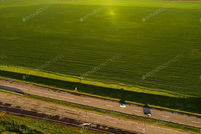 Draufsicht auf das gesäte Grün in Belarus.Landwirtschaft in Belarus.Textur