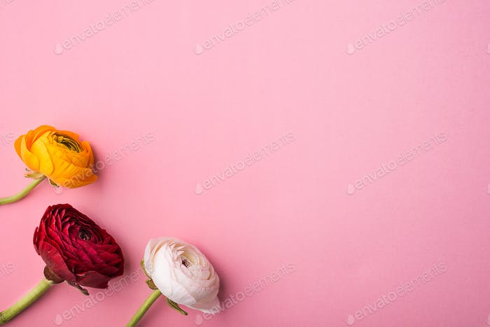 Three colorful flowers on a pink background. Copy space.