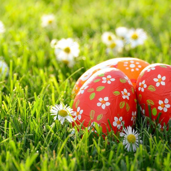 Easter eggs lying on green spring grass along with Bellis flower