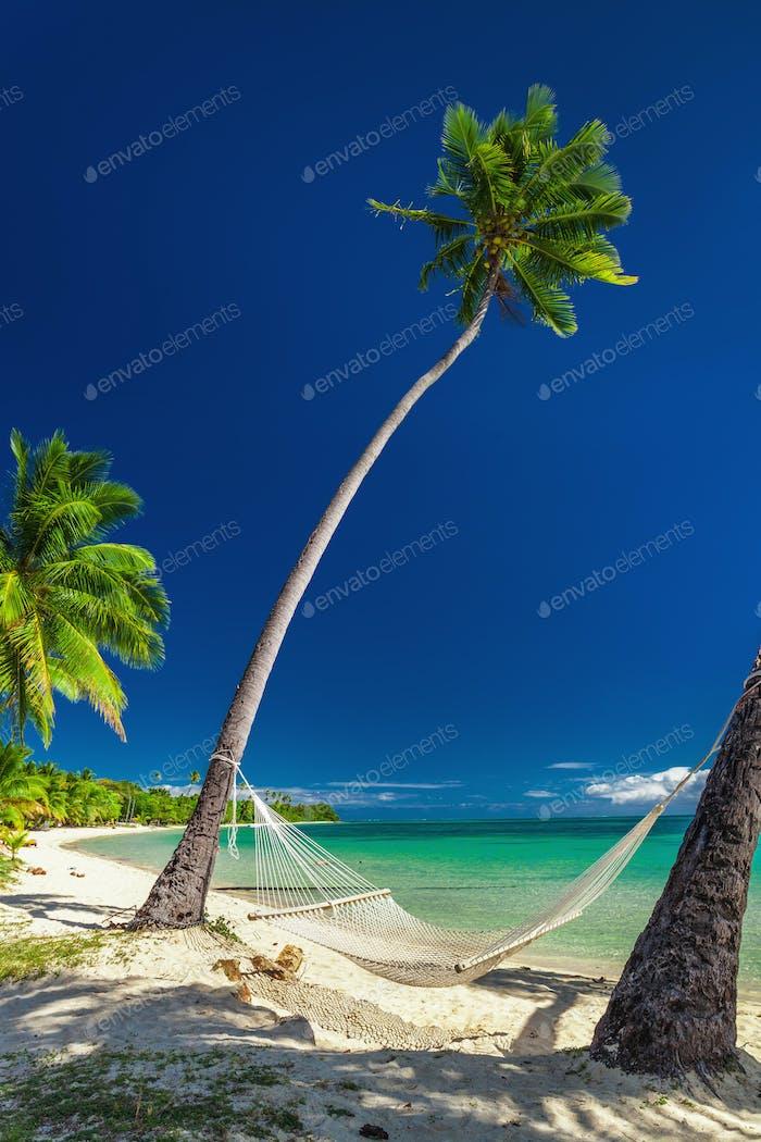 Empty hammock under tall palm trees, tropical beach, Fiji