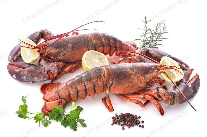 lobsters in studio