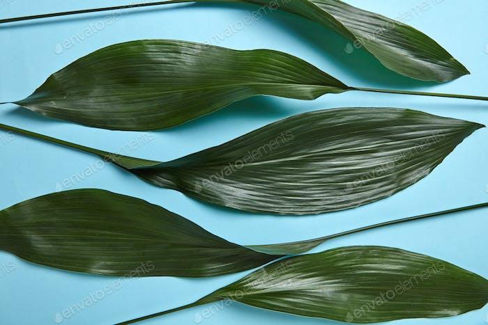 Schöne Komposition von grünen Blättern auf einem blauen Hintergrund mit Platz für Text. Flache Lag