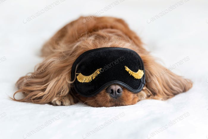 Cute dog in sleeping mask