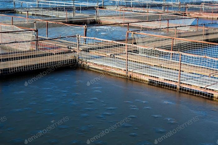 Fischfarm für Brüten Störe in Astrachan, Russland