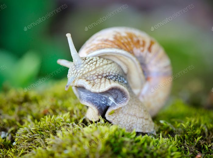 Snail crawling on the moss
