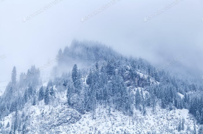 mountain top in winter covered with fog