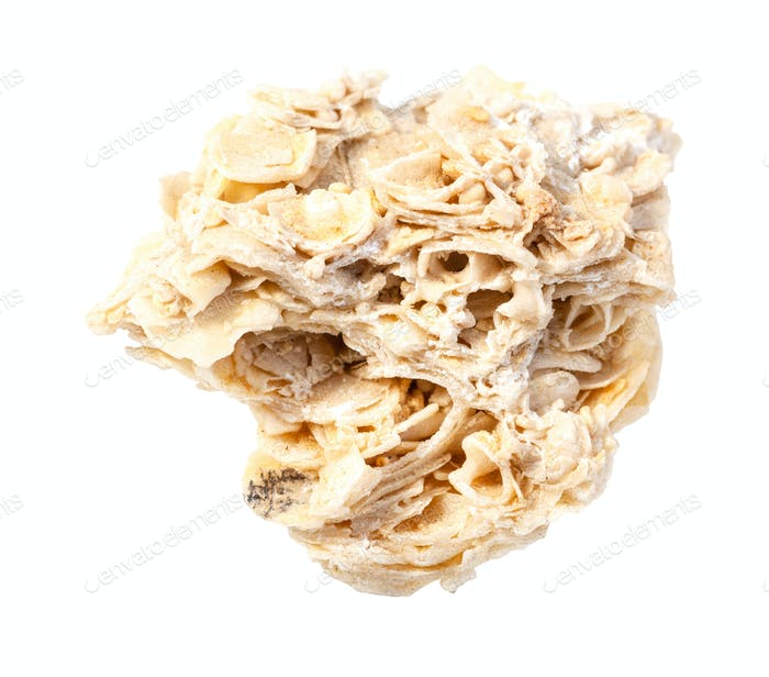 ungeschliffener Muschelkalkstein isoliert auf weiß