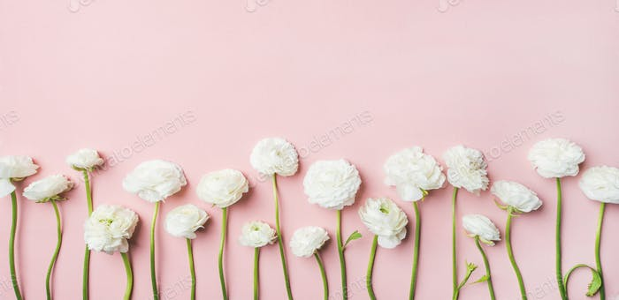 Saint Valentines Day background with ranunculus flowers, light pink background