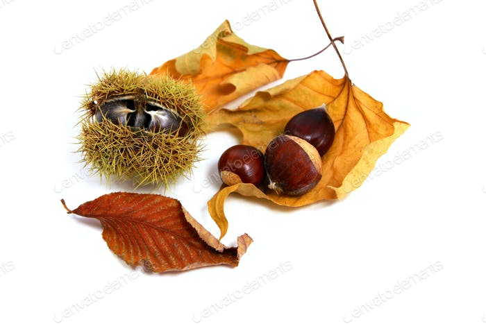 edible chestnuts anf leaves