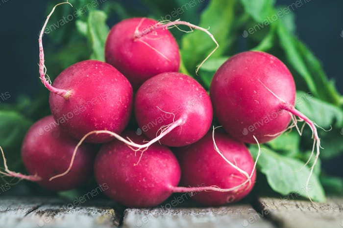 Branch of fresh radish