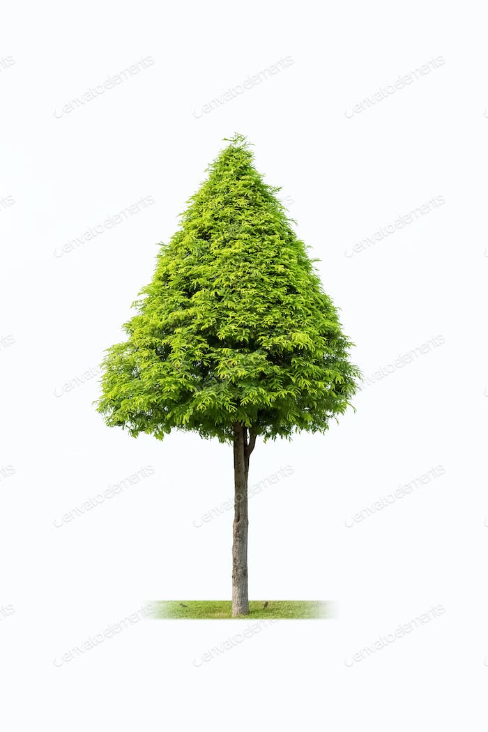 landscape tree isolated