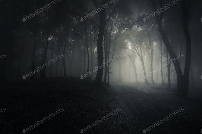 Scary woods at night with mysterious fog