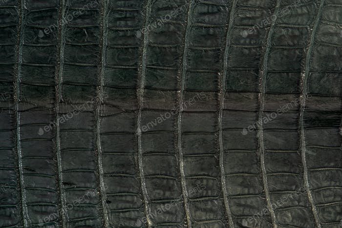 Alligator, leather in green colour skin