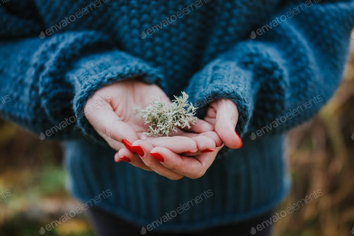 Lichen in hands