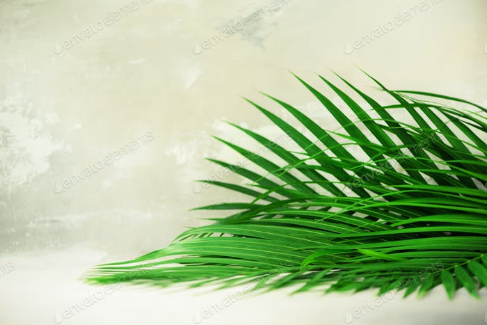 Tropical palm leaves on grey concrete background. Minimal summer concept. Creative flat lay with