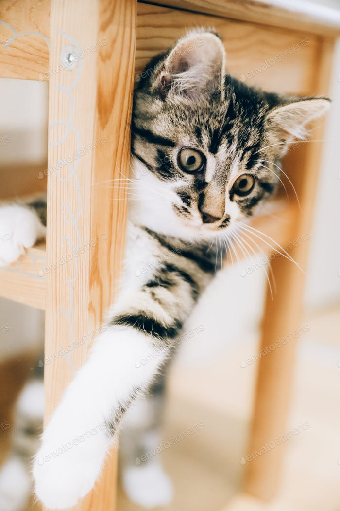 Funny Kitten Inside of the Wooden Stool