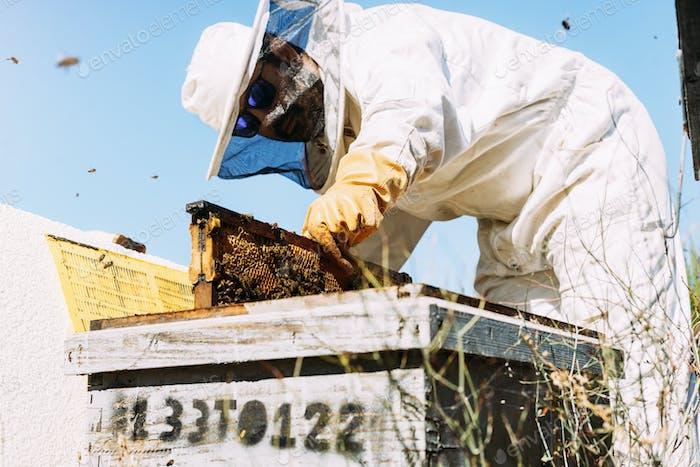 Imker arbeiten sammeln Honig.