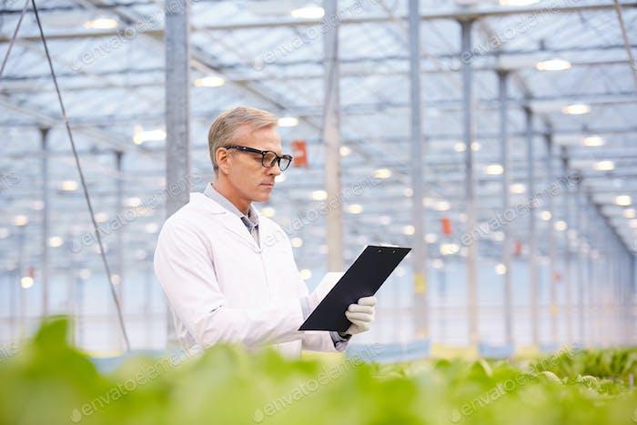 Scientist at Vegetable Plantation