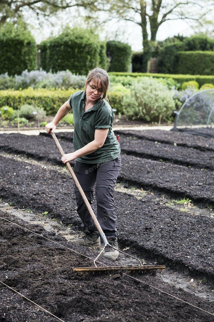 Woman raking freshly laid bed of soil in a vegetable garden.