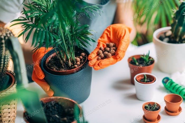 Frau Pflanzen Blumen zu Hause, Indoor Gardening Konzept