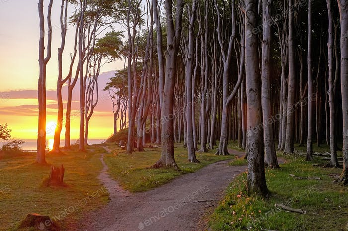 Sunrise at a beech forest