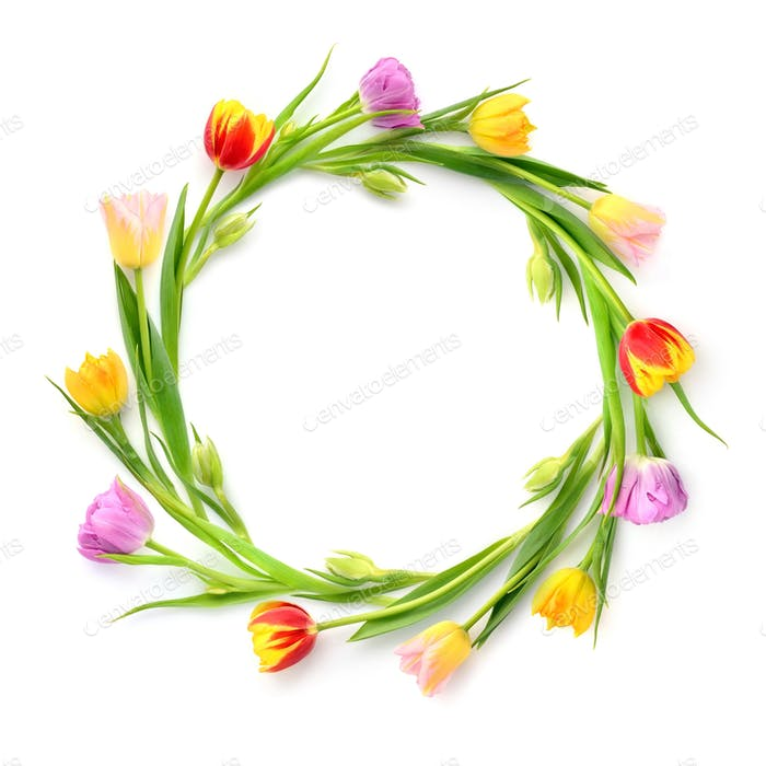 Circle of multicolored tulips on a white background with empty s