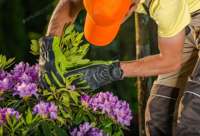 Gardener Checking on Flowers