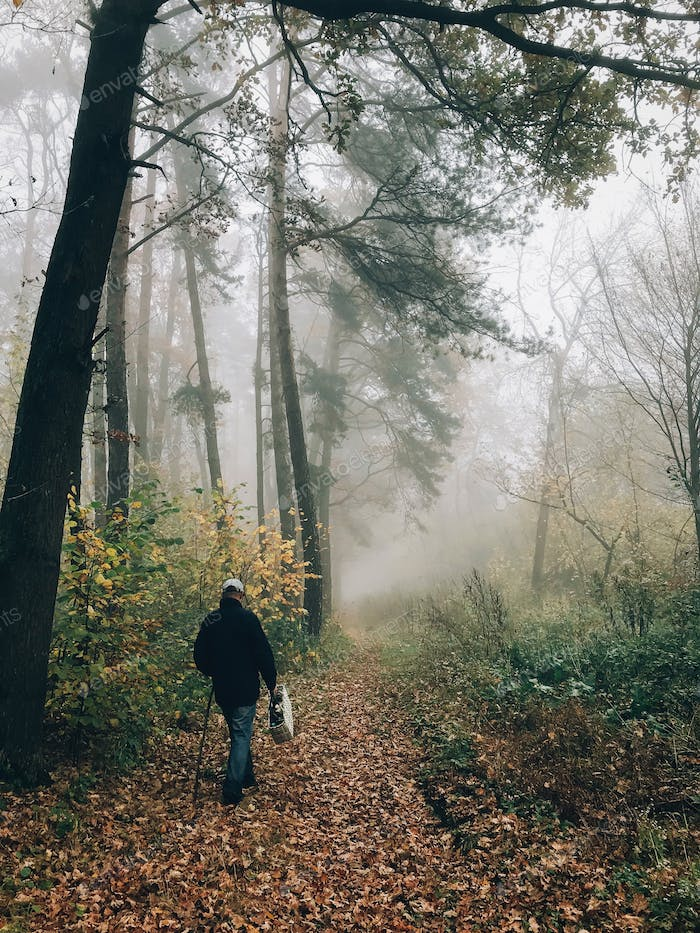 Mushroom picker with basket walking in autumn foggy woods with fall leaves