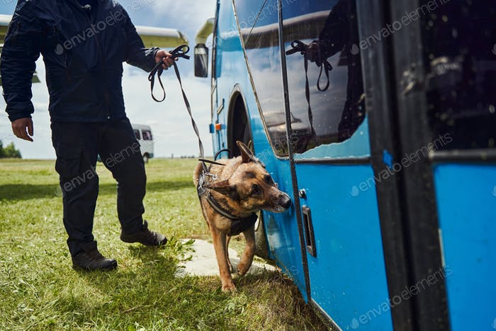 Security officer and detection dog inspecting vehicle at aerodrome