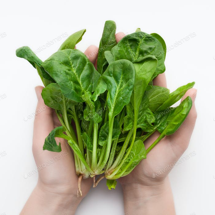 Fresh spinach in hands on white background