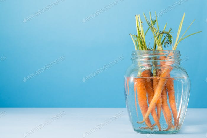 Bunch of fresh carrots in glass vase with water