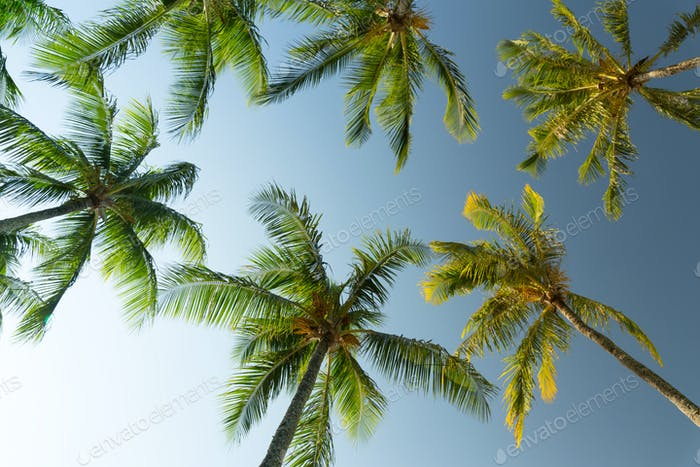 Cielo soleado con palmeras