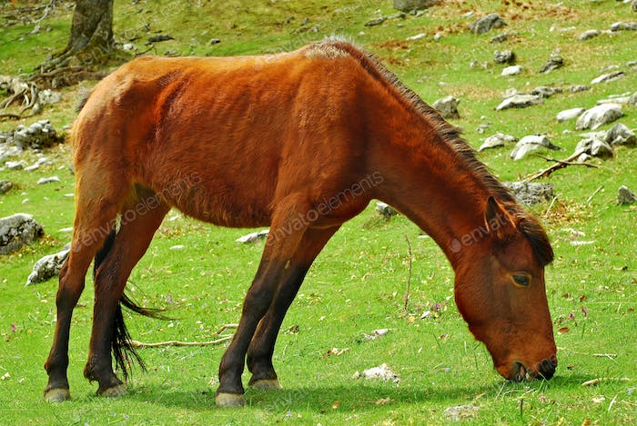 horse eating