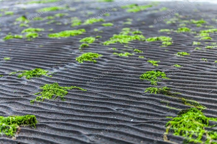 Details und Linie im Sand Textur eines Strandes