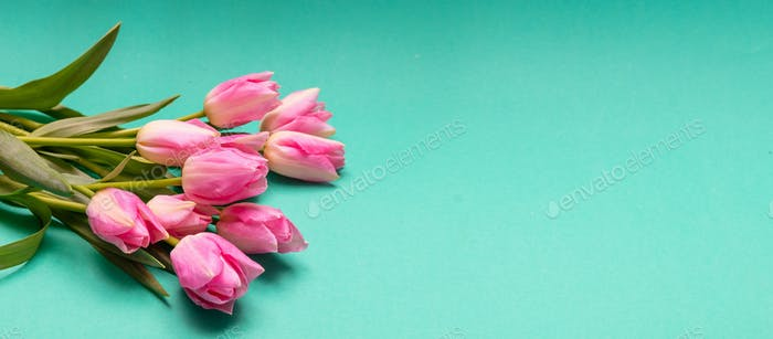 Springtime, easter. Pink tulips on green background, banner, copy space