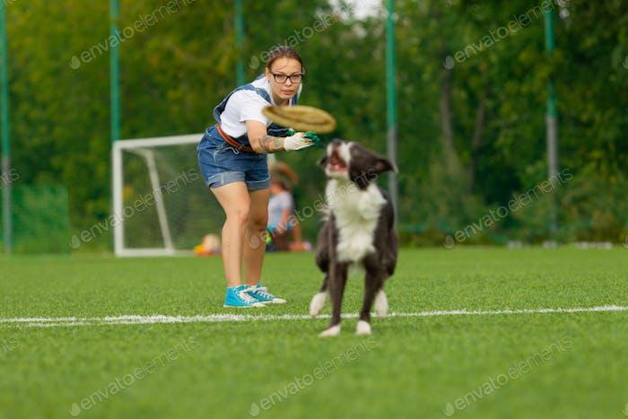 Border Collie Rasse Hund für einen Spaziergang an einem sonnigen Sommertag