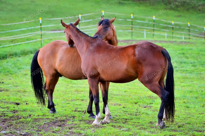 Two young horses together on pasturage in summer