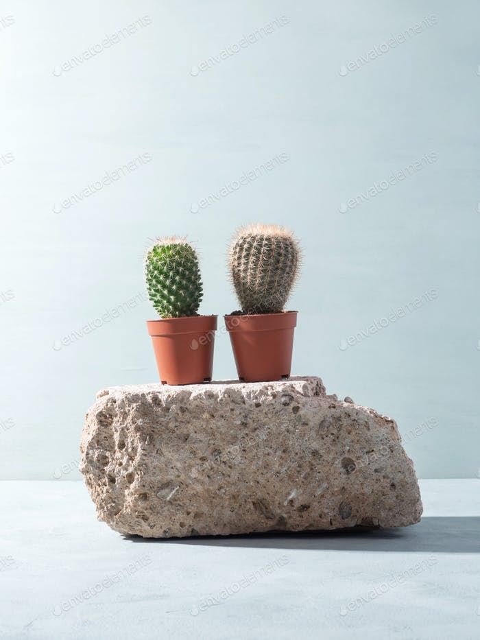 Natural rough gray stone podium background with cactus, hard shadows