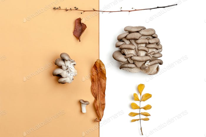 A composition of oyster mushrooms and dry autumn leaves on an or