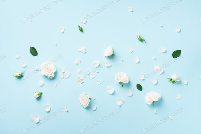 Flowers composition. White roses and floral petals on blue background. Flat lay, top view. Creative