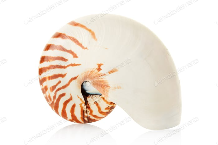 Nautilus shell on white, clipping path