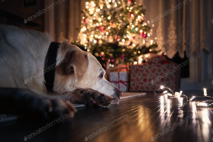 Christmas celebration with dog