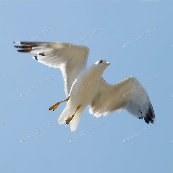 Flying seagull on the blue sky background
