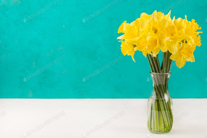 Yellow narcissus flowers in glass vase Copy space