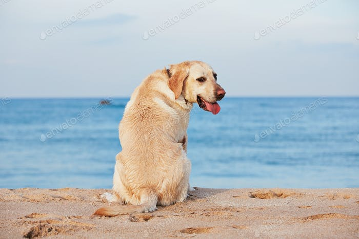 Dog and sea
