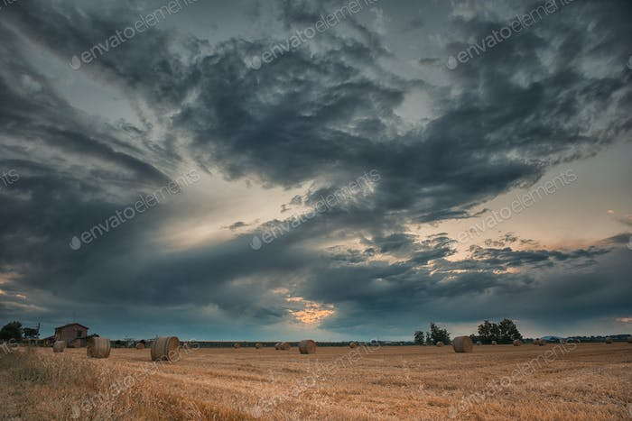 Harvested wheat fields in the Italian summer evening