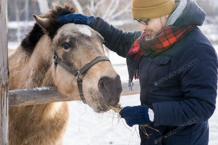 Mann Fütterung Pferd auf Ranch