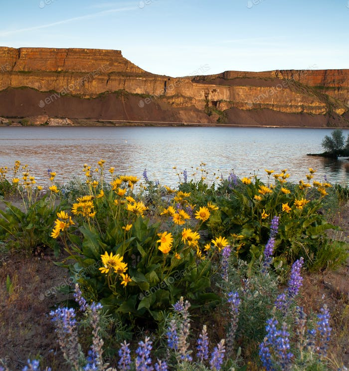 Spring Wildflowers Banks Lake Devil's Punch Bowl Eastern Washington